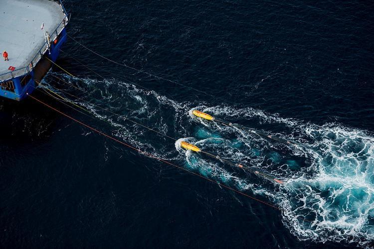 Ballenas mar argentino1