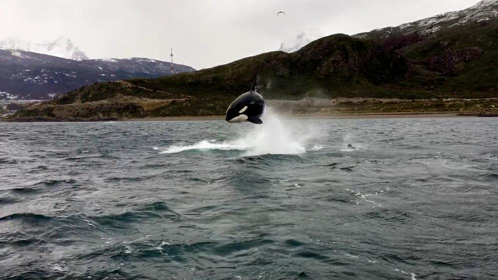 orcas ushuaia 2