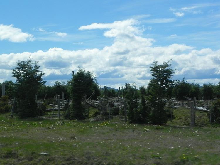 Denuncian desaparición de casi 300 vacas — Tierra del Fuego