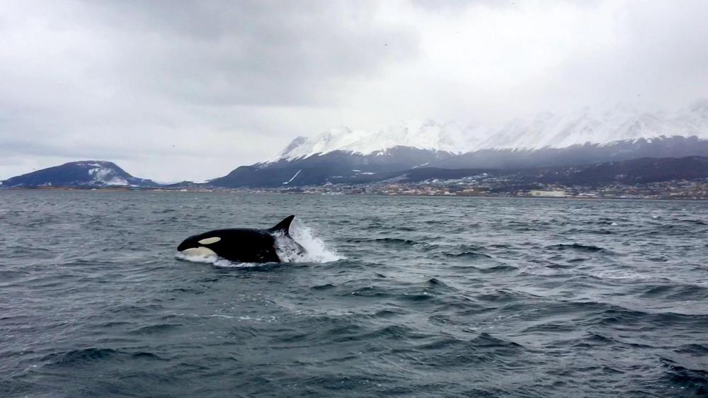 orca ushuaia